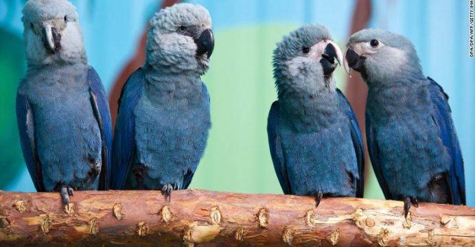 El ave azul