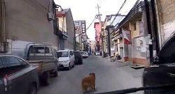 Un perro guía a la ambulancia hacia donde está su dueño
