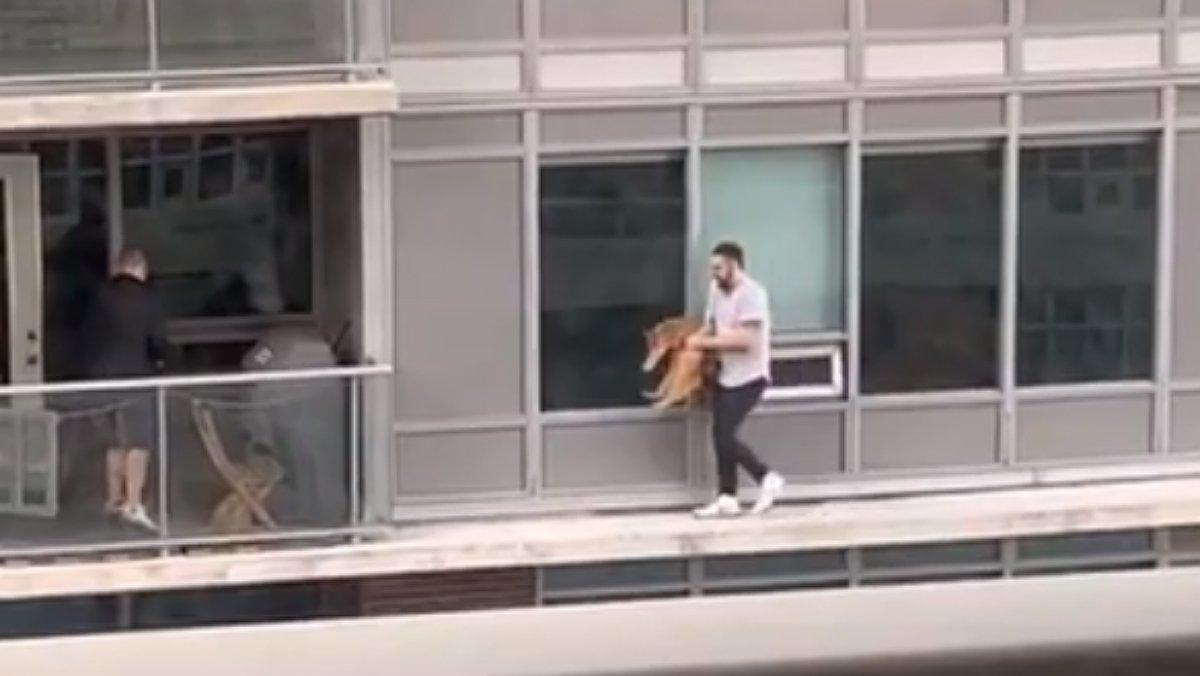 Un hombre arriesga la vida caminando por una cornisa para rescatar a su gato