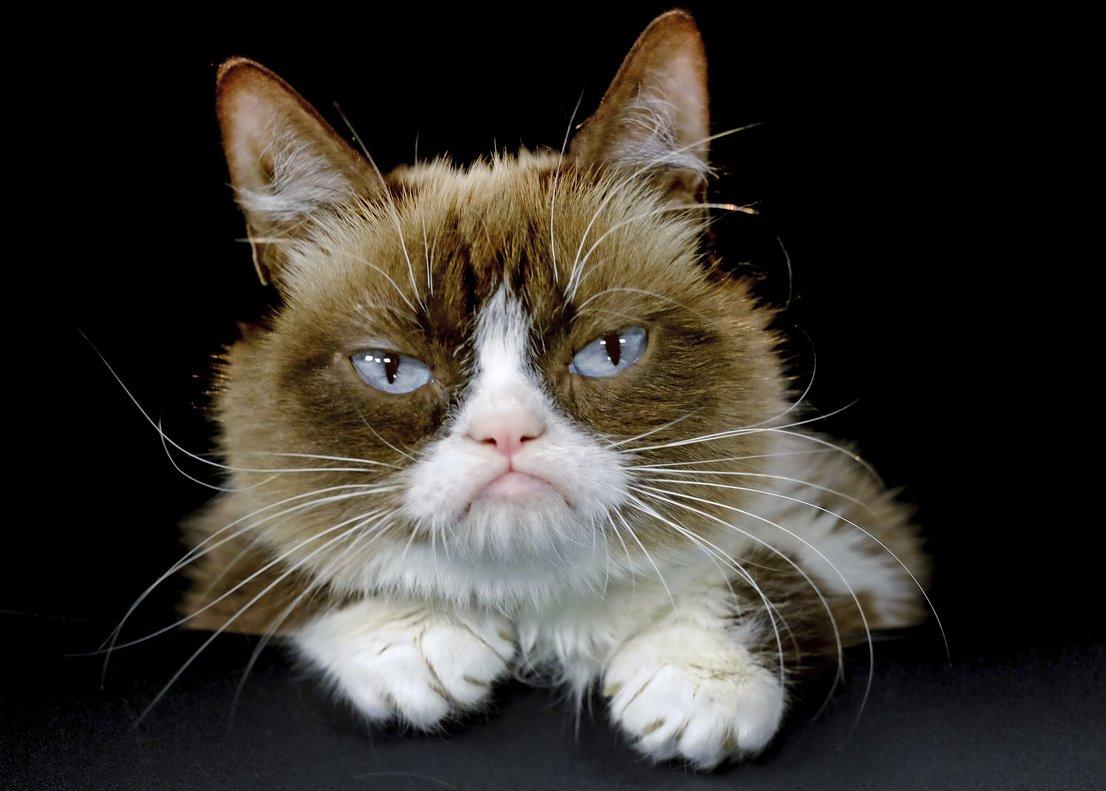 grumpy-gata