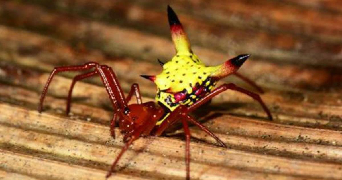 La curiosa Araña que parece un Picachu