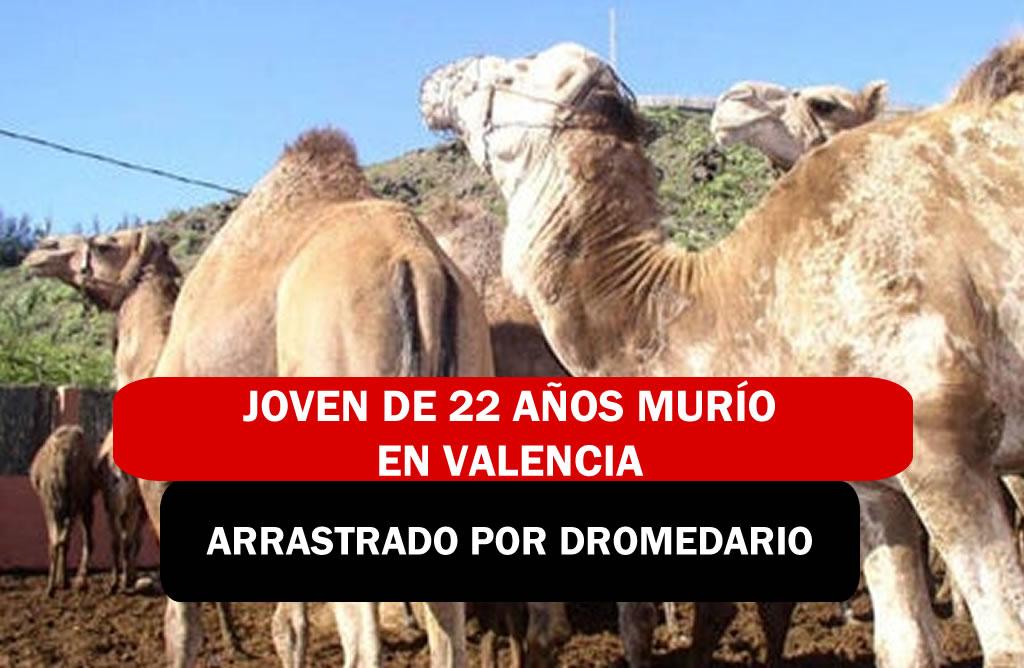 jOVEN DE 22 AÑOS MURIO EN VALENCIA ARRASTRADO POR DROMEDARIO